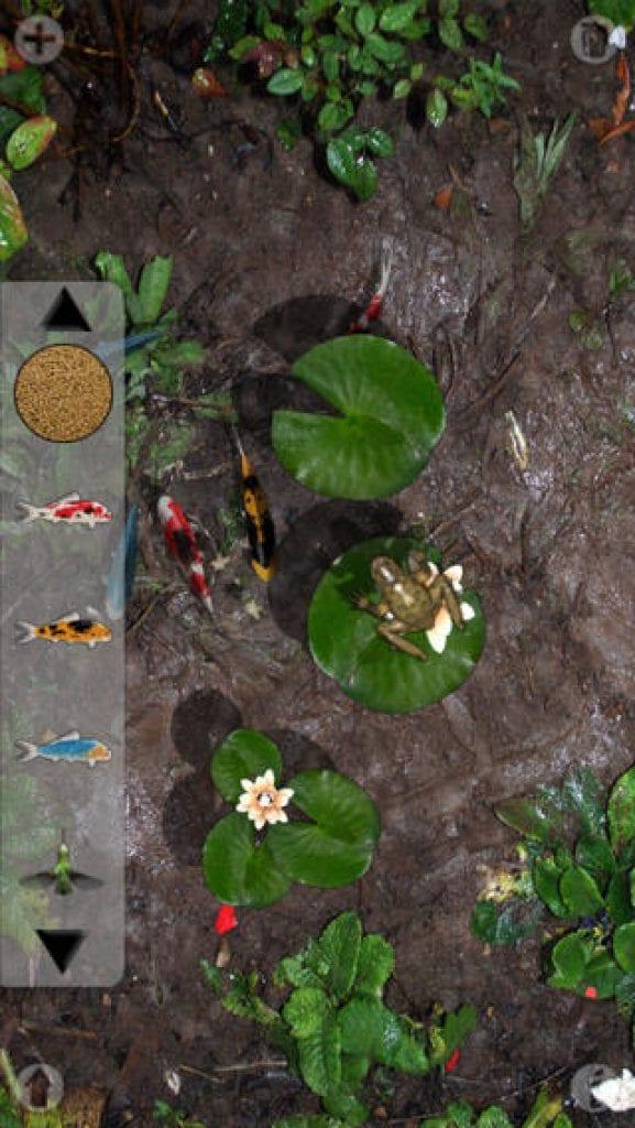 a pocket pond