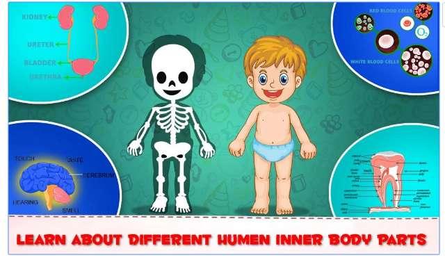 Learning Human Body