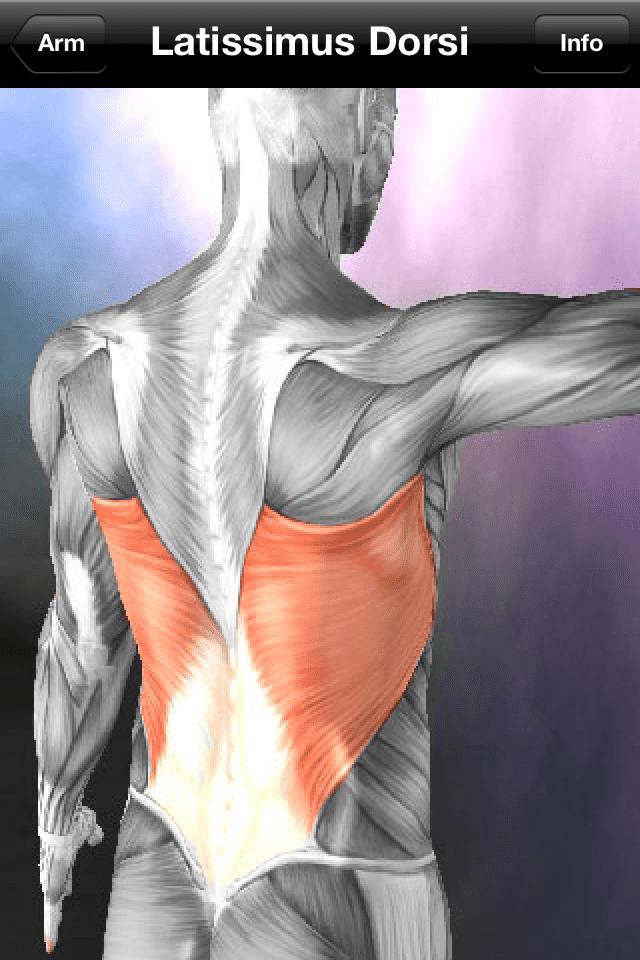learn-muscle-2