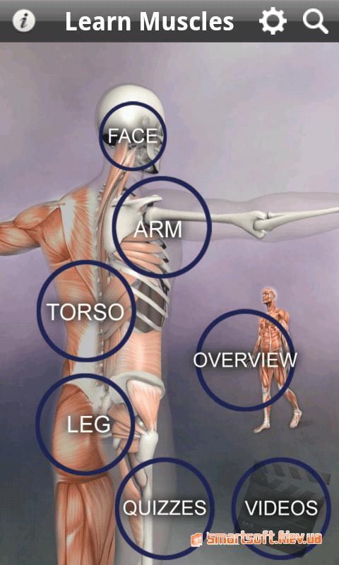 learn-muscle-3