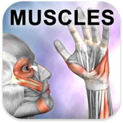 learn-muscle