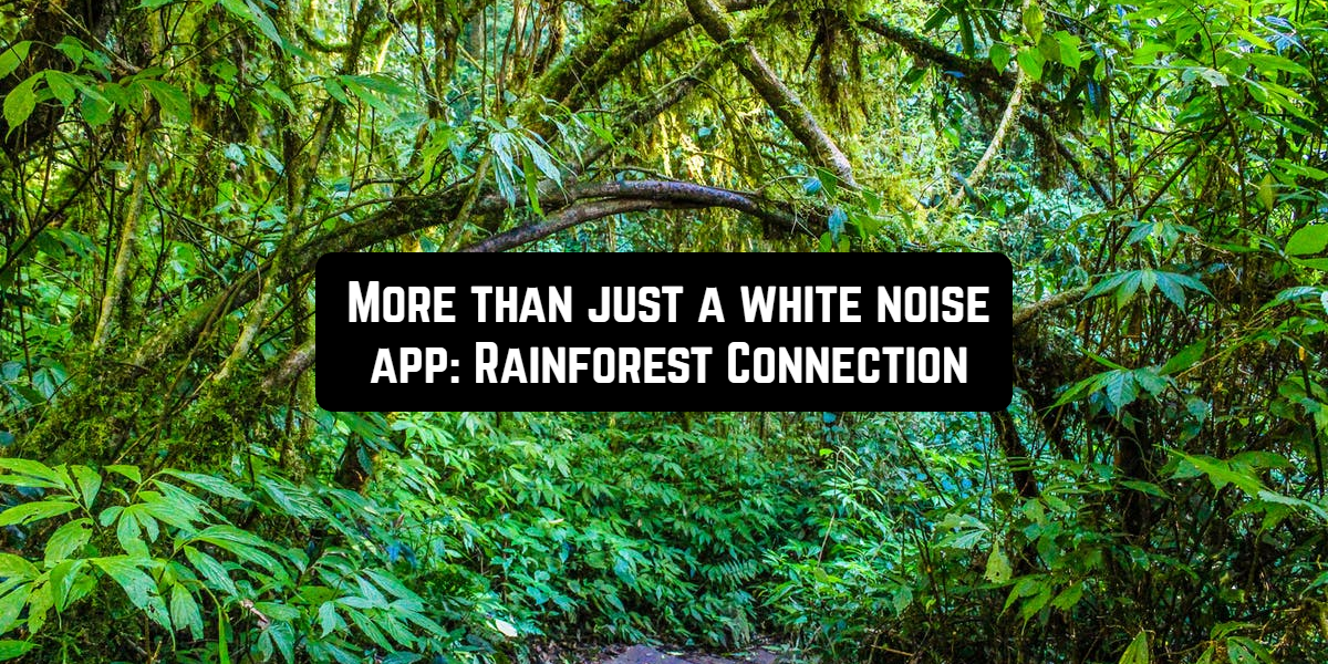 rainforest connection front