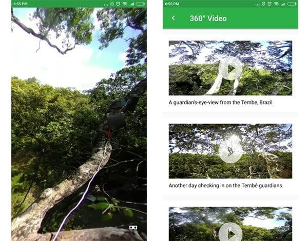screen 1 rainforest