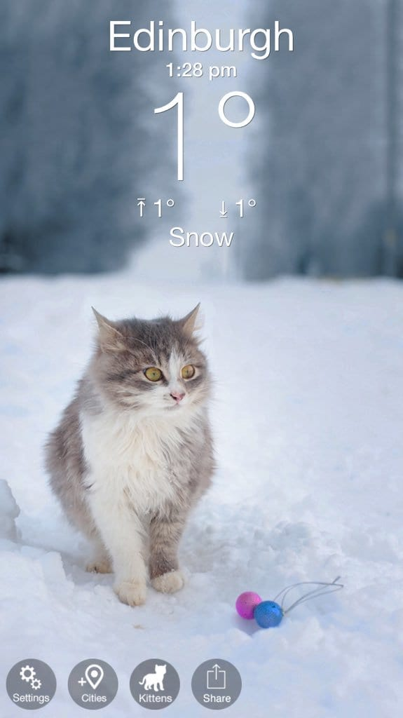 WeatherKitty2
