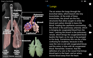 Horse Anatomy2
