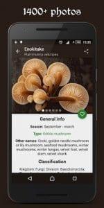 Book of Mushrooms2