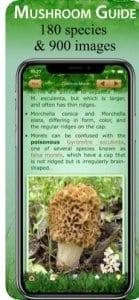 Mushroom Book & Identification1