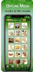 Mushroom Book & Identification2