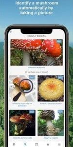 Mushroom Identify 1