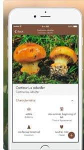 Mushroom LITE 2