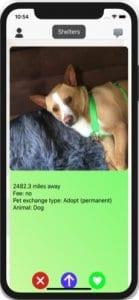 Pet Adopter1