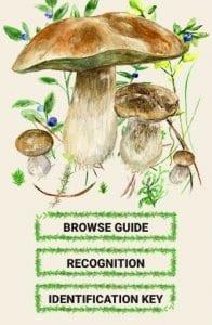 mushrooms app2