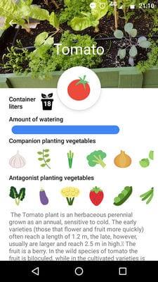 urban veggie garden2