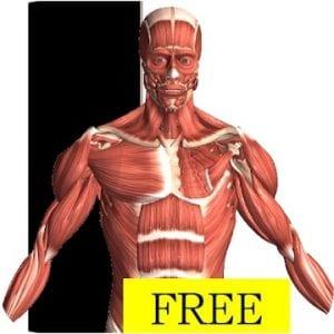 Visual Anatomy Free logo