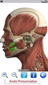 Visual Anatomy Free screen 2