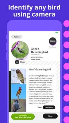 bird identification1