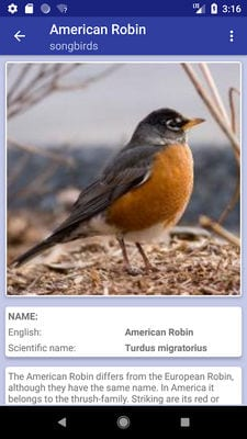 bird identifier2