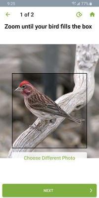 merlin bird id2