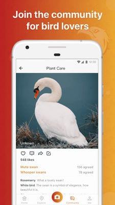 picture bird2