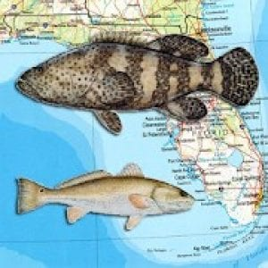 florida fish map