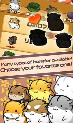 Hamster Life2