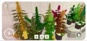 Weed Shop 21