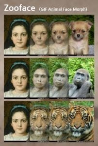 zooface 1