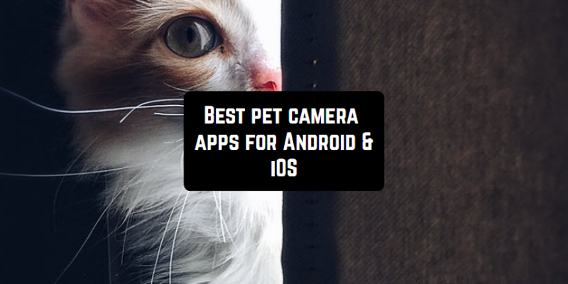 7 Best pet camera apps for Android & iOS