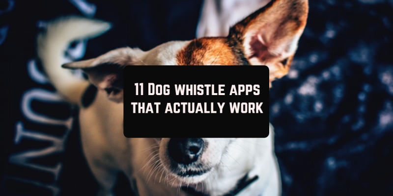 11 Dog whistle apps that actually work