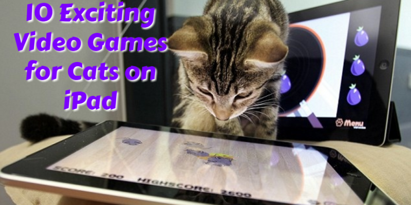 10 Exciting Video Games for Cats on iPad