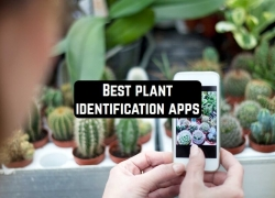 16 Best plant identification apps for Android & iOS