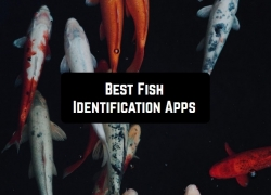 7 Best Fish Identification Apps for Android & iOS