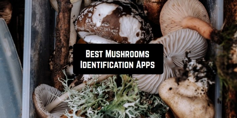 7 Best Mushrooms Identification Apps for Android & iOS
