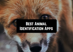 4 Best Animal Identification Apps for Android & iOS